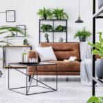Intérieur : Où mettre les plantes vertes pour une déco parfaite?