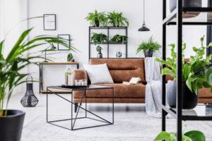 plantes vertes pour une déco parfaite